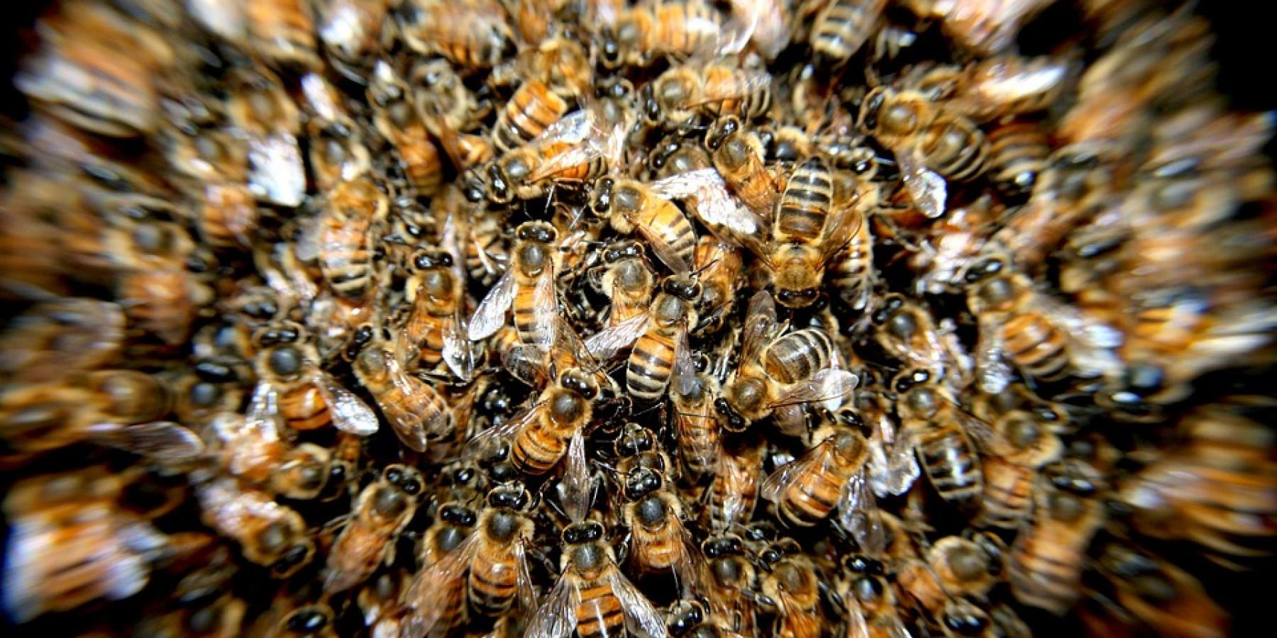 Behandlungspflicht für alle Bienenvölker