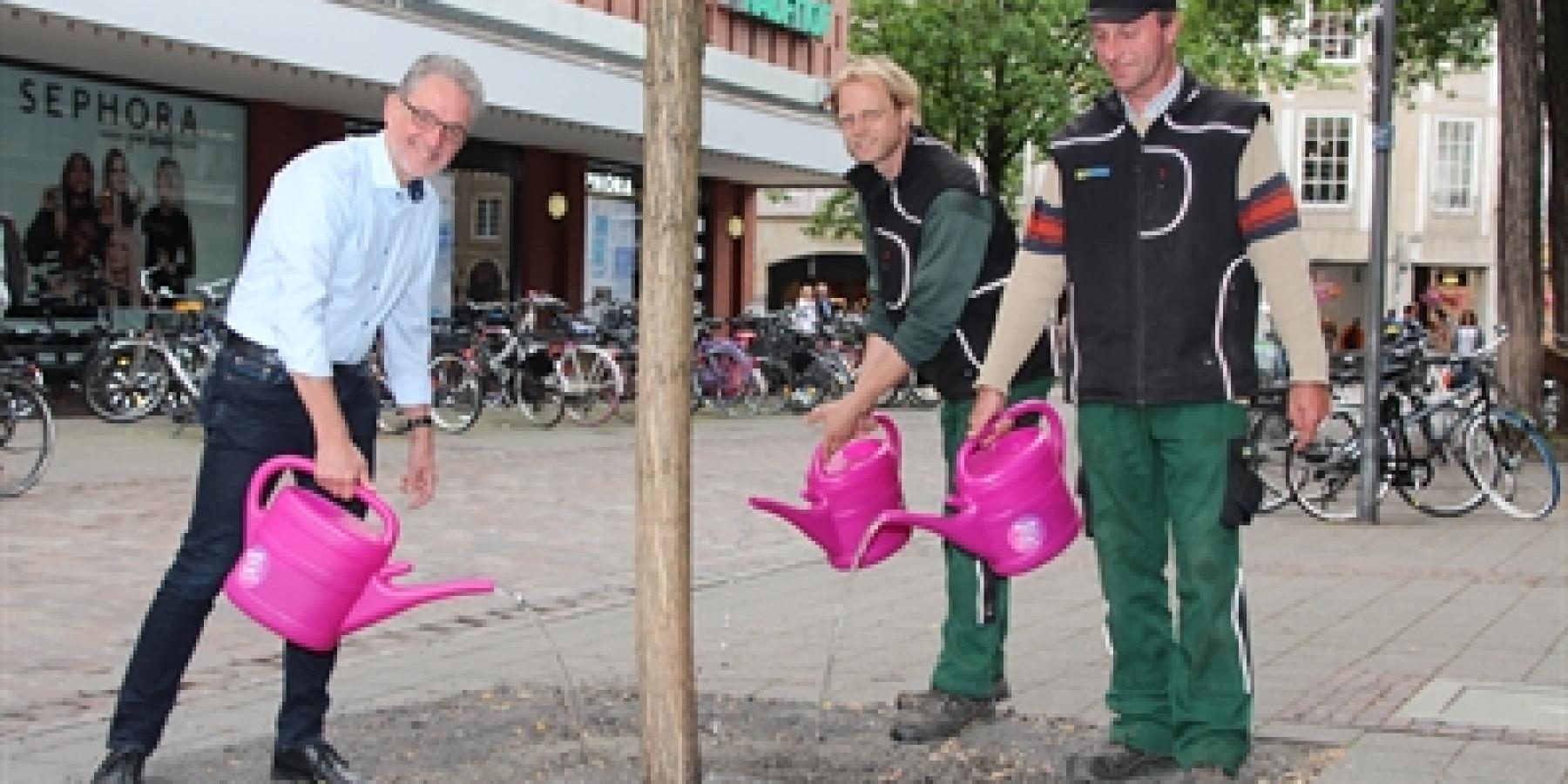 "Hilfe  für gestresste Straßenbäume: ""Münster gießt"""
