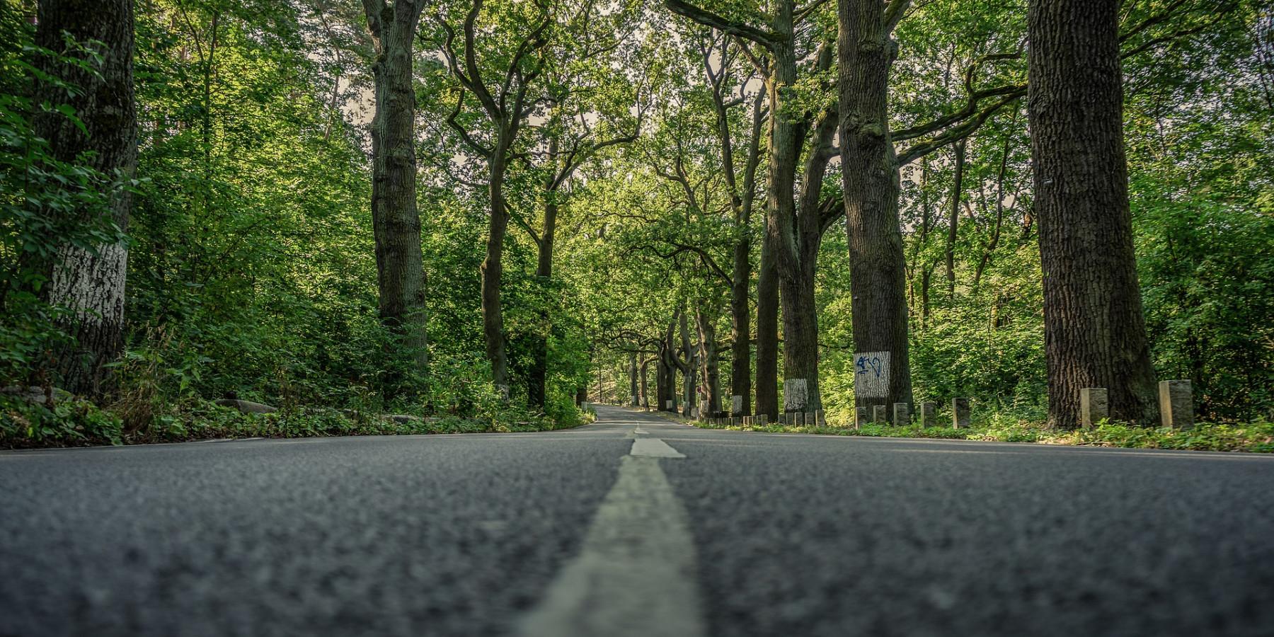 Hohe Geest: Verkehrsbehinderungen wegen Baumfällung