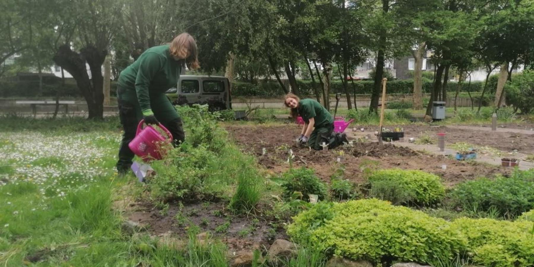 Gemüsepflanzen für die Grünschleife